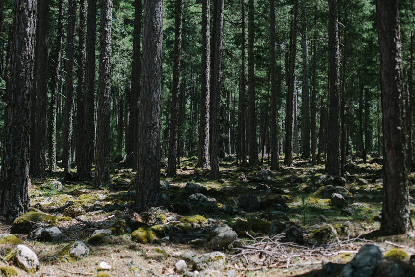 forest on Corsica